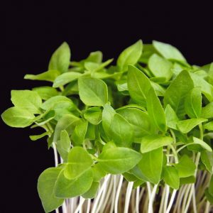 Basil Lemon Cress